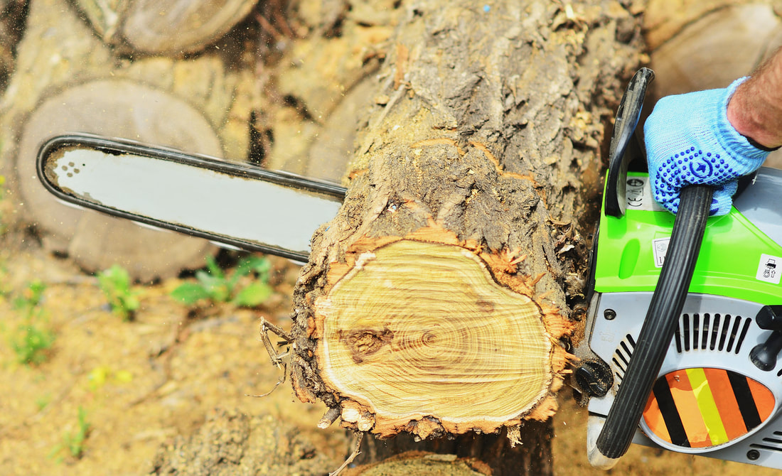 Chainsaw cutting through fallen tree trunk